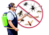 Pest Control Services in Hebbal
